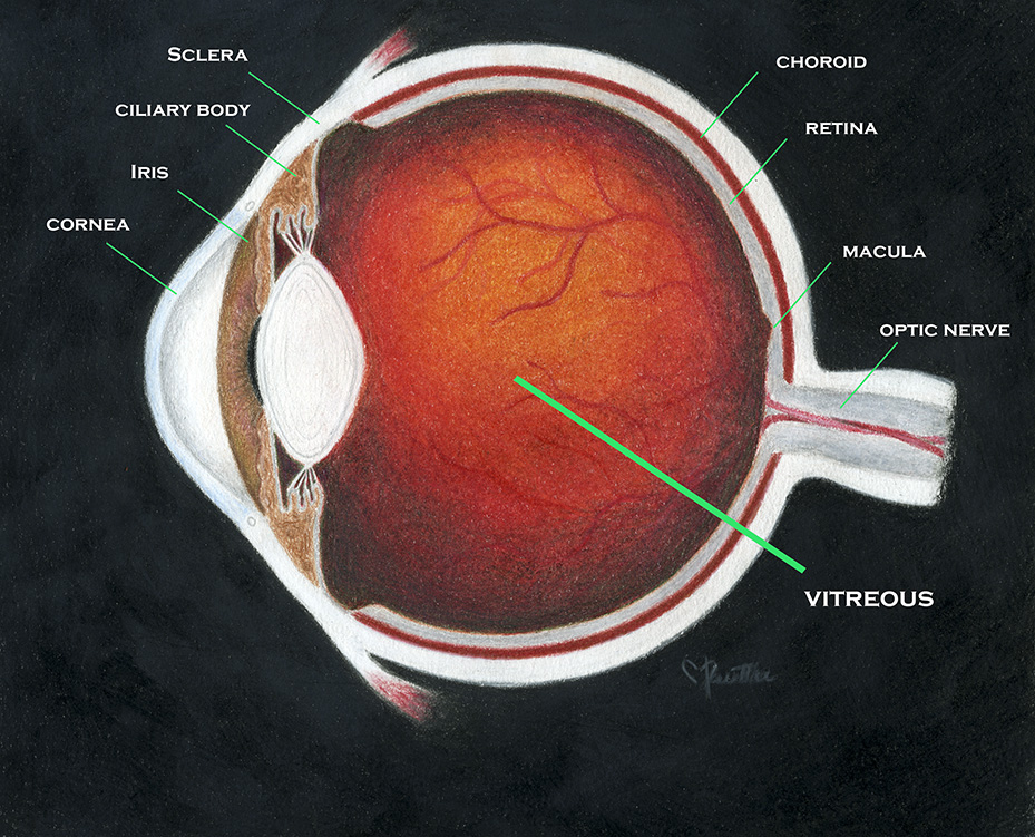 Vitrectomy Surgery Scott E Pautler M D Tampa